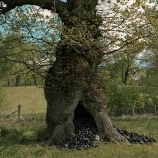 Coal Tree 2015 Sarah Rhys